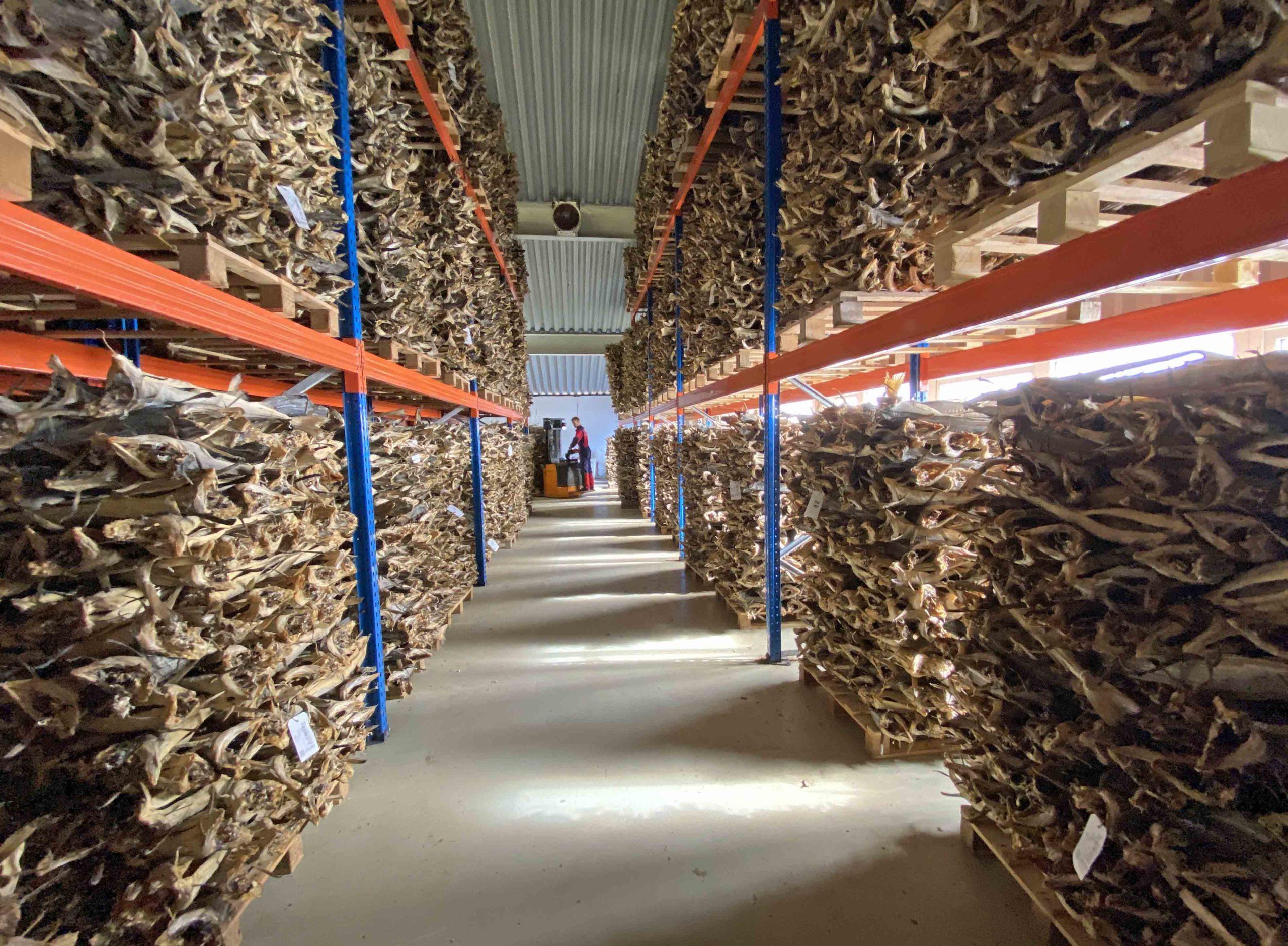 Tørrfisk for mange millioner er lagret på tørrfiskloftet til John Greger AS